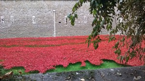 world war one,poppies,